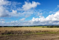 Rural Lancashire. The view out over rural Lancashire with the open fields and farmers crops Royalty Free Stock Image