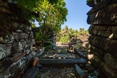 View out of the overgrown walls of Nan Madol - prehistoric ruined city. Pohnpei, Carolines, Micronesia, Oceania. stock photos