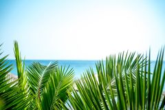 Palm tree leaves below a view of the sea stock image