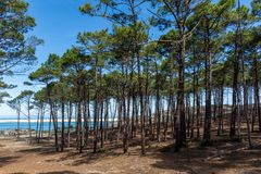 Arcachon Bay, France : view over the sand bank of Arguin from the pine forest. View over the Atlantic ocean and the sand bank of Arguin from the pine forest of royalty free stock photography