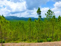 View over a beautifully green forest in the western part of Cuba stock photos