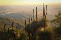 Bunya Mountains Landscape at Sunset with Grasstrees Royalty Free Stock Images