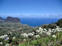 View over the coast of Madeira to the sea. View over white flowers growing on the coast of Madeira island to the sea stock photo
