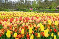 View over colorful field of tulips in a garden. View over colorful field of tulips in Keukenhof garden, Netherlands royalty free stock images