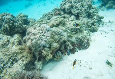 View over Coral Reef: New Caledonia. Colourful clown fish, domino damsel, wrasse and surgeonfish swimming in natural coral reef system off the coast of Yejele stock photography