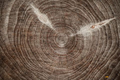 View over cut piece of timber Stock Photo
