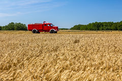 View over a field with mature wheat at farmland. Royalty Free Stock Image