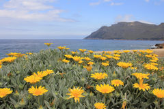 View over the flowerbed. View over a Majorcan flowerbed onto a Mediterranean bay Royalty Free Stock Images