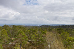 View over forest with cloudy sky Royalty Free Stock Photo