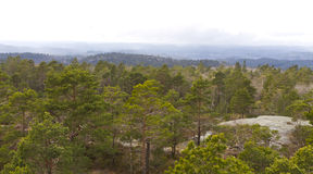 View over forest with cloudy sky Royalty Free Stock Images