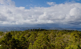 View over forest with cloudy sky Stock Images