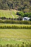 View over grape vines at a vineyard. On the east coast of Tasmania, Australia Stock Photo