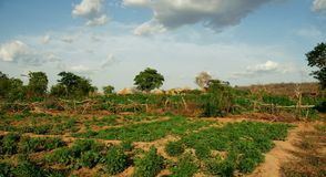 View over the green fields of a small organic farm in Ghana royalty free stock photo