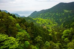 View over green forest with different coloring in Lushan National Park mountains Jiangxi China. View over green forest with different coloring in Lushan National royalty free stock photo