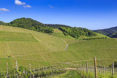 View over green vineyard hills Royalty Free Stock Photo