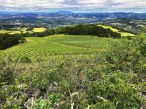A view over the hills and vineyards of Sonoma County, California. The lovely rolling hills and vineyards in the countryside of Sonoma County, California Royalty Free Stock Photography