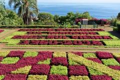 View over Jardim Botanico garden on Madeira. View over Jardim Botanico garden on Portuguese island of Madeira stock photos