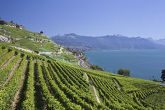 View over lake Geneva from the Lavaux vines. Royalty Free Stock Image