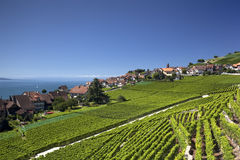 View over lake Geneva from the Lavaux vines. Royalty Free Stock Photos