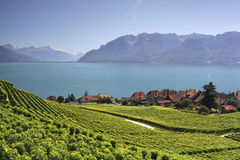 View over lake Geneva from the Lavaux vines. Royalty Free Stock Photography