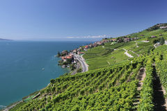 View over lake Geneva from the Lavaux vines. Stock Photo