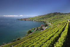 View over lake Geneva from the Lavaux vines. Stock Photos