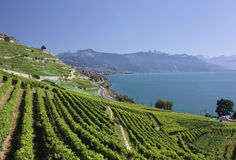 View over lake Geneva from the Lavaux vines. Royalty Free Stock Images