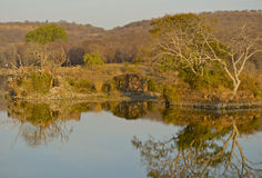 View over lake at Ranthambore National Park Royalty Free Stock Photography