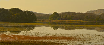 View over lake at Ranthambore National Park Stock Image