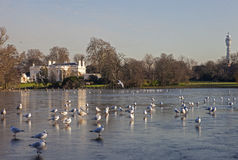 View over the Lake at Regents Park in London Royalty Free Stock Image