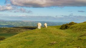 Landscape near Hay Bluff, Wales, UK. View over the landscape of the Brecon Beacons National Park, seen from Gospel Pass, Powys, Wales, UK Stock Photography