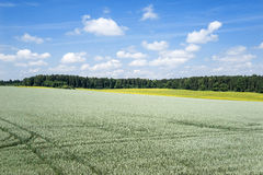 View over a large green grain field Stock Photography