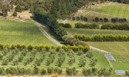 View over large vineyard and olive plantation. On the east coast of Tasmania, Australia Royalty Free Stock Photos