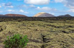 View over a lava field on Lanzarote with red and white volcanoes in the background Stock Photos