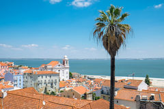 View over Lisbon with a palm tree Stock Photo