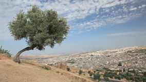 View over medina of Fes, Morocco stock footage
