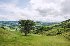 View over Monteverde. View over the green hills in Monteverde, Costa Rica royalty free stock photography