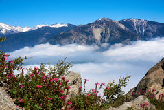 View over the mountain landscape and over the clouds with flowers in the foreground. Moro Rock, Sequoia National Park, California, USA stock images