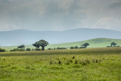 View over Ngorongoro Crater, Tanzania, East Africa (UNESCO World Stock Photos