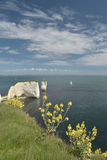 View over Old Harry Rocks, Swanage Stock Image