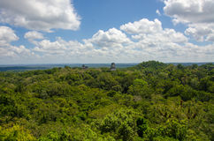 View over the rainforest in Tikal Guatemala Royalty Free Stock Photos