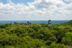 View over the rainforest in Tikal Guatemala Stock Images