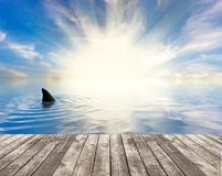 Shark's fin seen from the jetty. View over the sea from a wooden quay or jetty with a bright sun and a shark's fin visible in the ocean  close to the Stock Images