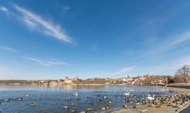 Many waterfowl on the shore of beautiful Sweet Lake in the Mansfelder Land in Germany stock photos