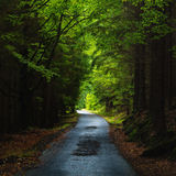 View over a straight road in the dark wood Stock Images