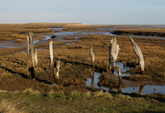 A view over Thornham Marsh, North Norfolk. Royalty Free Stock Photography