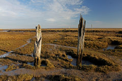 A view over Thornham Marsh, North Norfolk. Royalty Free Stock Photo
