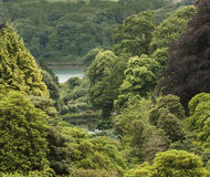 View over Trebah Gardens Royalty Free Stock Photography