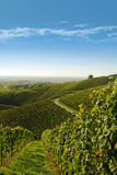 View over vineyard landscape Royalty Free Stock Photos
