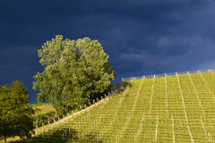 View over the vineyards and Langa hills during a thunderstorm. View of vineyards and Langa hills during a thunderstorm, suggestive contrast between dark skies stock images